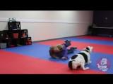 Ive Got Faith ~ Canine Freestyle Routine