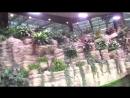 Крокус Сити Океанариум. Часть 1 - Рыбы рек и озёр (продолжение)