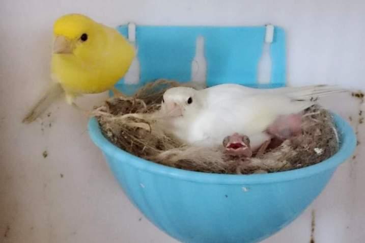 Фотографии моих птиц  - Страница 4 Y6R4Vk4mtuY