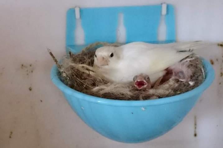 Фотографии моих птиц  - Страница 4 R1rl-Z1m6cw