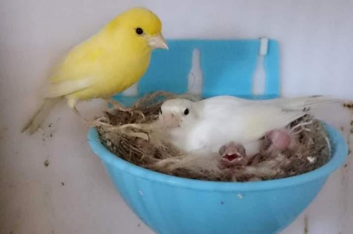 Фотографии моих птиц  - Страница 4 9uD5fM-IXcg