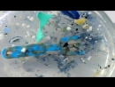 Как мусор губит планету - Чарльз Мур