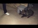 Все О Домашних Животных Енотовидная Собака Римма
