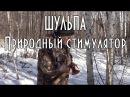 Шульпа / Тайга моя заветная / 26.02.2017
