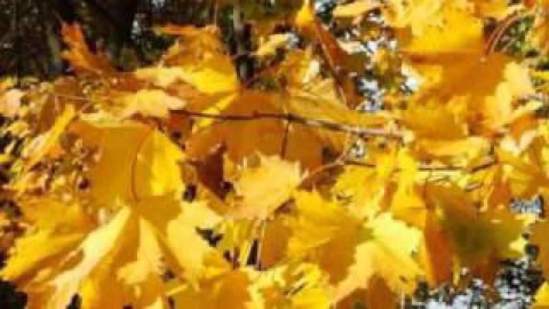 Осень-рыжая подружка