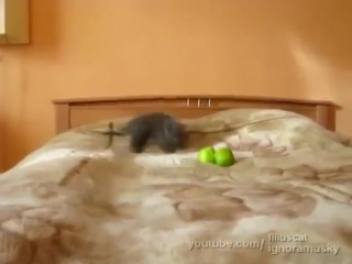 Котенок против ДВУХ неведомых хреней