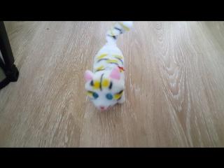 Адская кошка