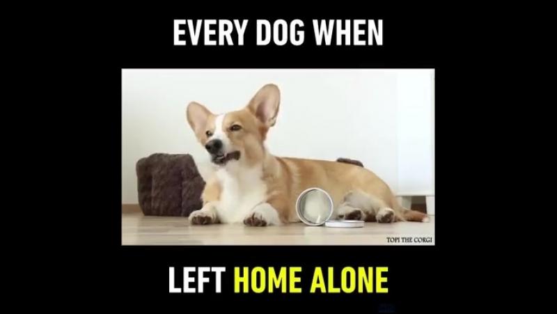 Когда нас нет дома...🐕😁😁