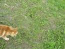 Бедная мышь