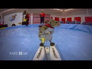 The Water Skiing Squirrel [V/M]