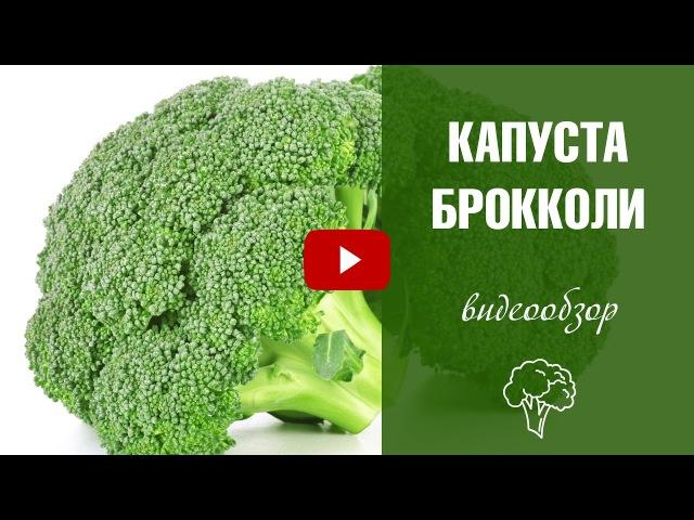Капуста брокколи ✅ Лучшие сорта и особенности выращивания ✅ Польза для человека