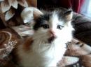 Кошки-наши любимые питомцы! Кошки и смешное видео про кошек! Cats are our favorite pets