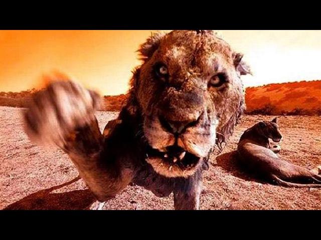 Документальный фильм - Животные - Людоеды - National Geographic