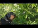 Возвращение служебной собаки потеряшки