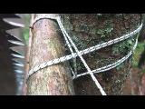 Какими узлами строить дом на дереве? Как заточить пилу? #домнадеревеижизньвлесу