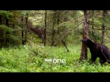 Bear dancing to The Pussycat Dolls | Planet Earth II Trailer | BBC One