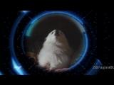 TheFatGabe - Doggity YTPMV