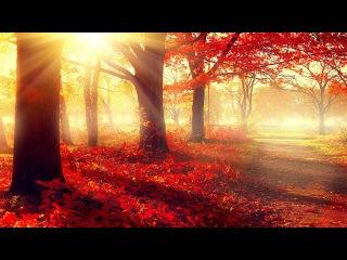 Beautiful Romantic Music: Relaxing Music, Piano Music, Violin Music, Guitar Music, Sleep Music ★101