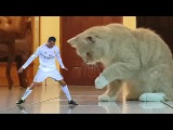 Cristiano Ronaldo Epic Jump Celebrations (BEST CR7 MEMES)