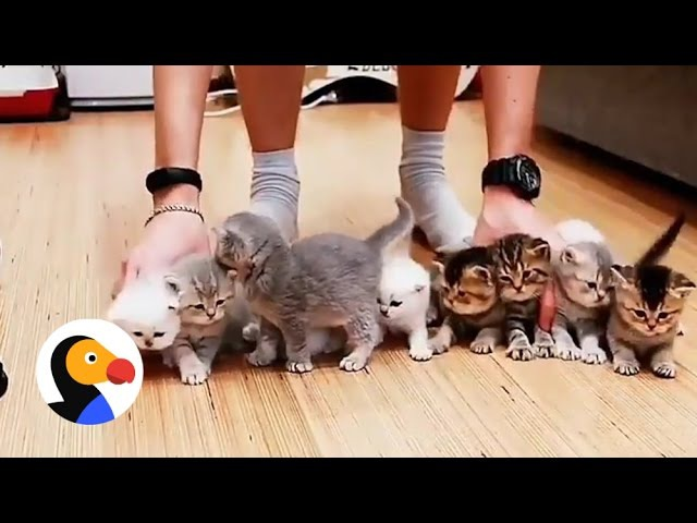 Adorable Kittens Won't Sit Still For This Picture   The Dodo
