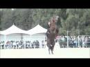 Лошадь танцует лезгинку