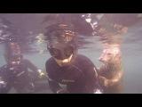 Baby Seal Selfie #coub