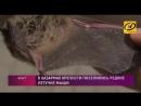 Редкие летучие мыши поселились в казармах Брестской крепости