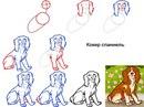 Рисуем собак разных пород