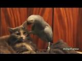 Смешной попугай с котом видео прикол с озвучкой (1)