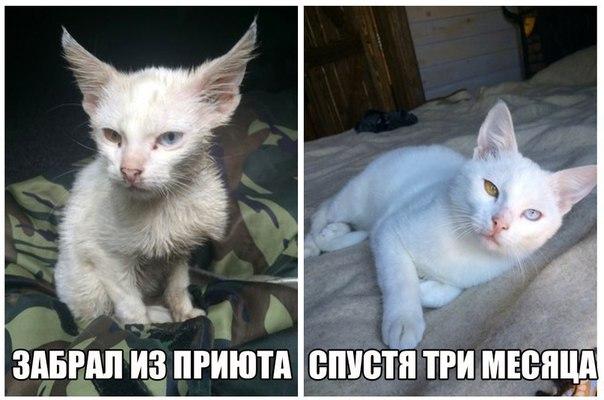 Фото №456240603 со страницы Тани Касиловой
