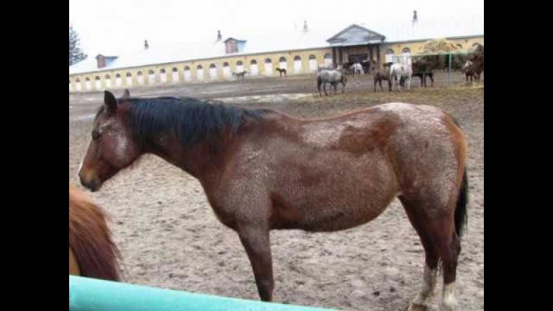 Прекрасные лошади... Хреновской конезавод.