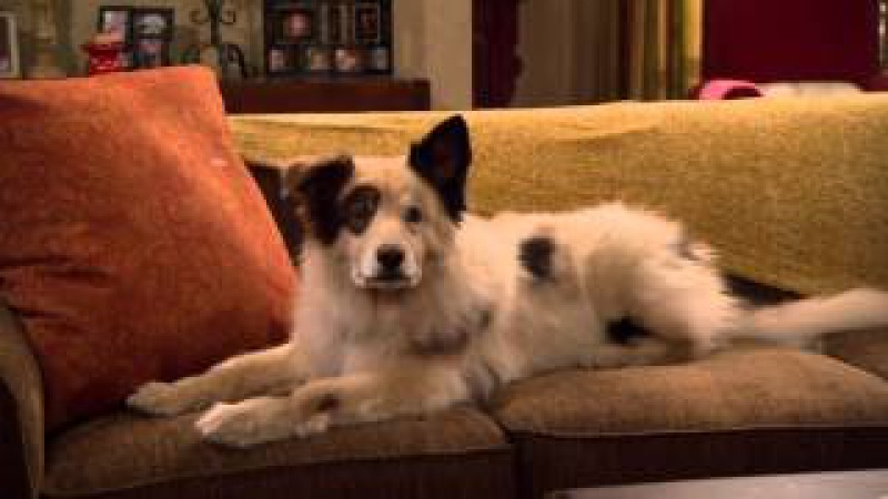 Сериал Disney - Собака точка ком (Сезон 1 Серия 2)