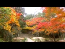 Релаксация - Осенний цвет Киото