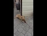 Пропала собака по кличке Бадди, любая информация важна