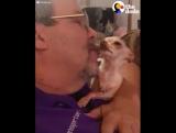 Эта собака не позволю её не целовать!