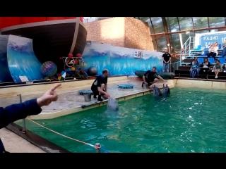 песня дельфинов и белуги в ростовском дельфинарии 28 05 17