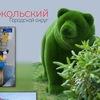 Администрация городского округа Сокольский НО