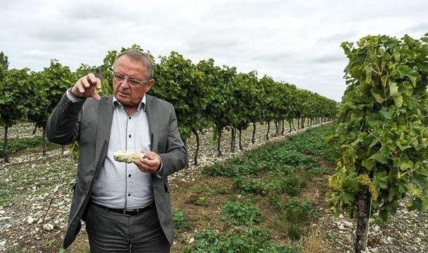Один день из жизни французского винодела  Бонжур!  Я – Мишель Валле. Р