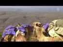 Unterwegs mit der Kamelklinik