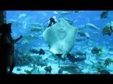 Кормление обитателей аквариума отеля Atlantis The Palm (The Lost Chambers)-2