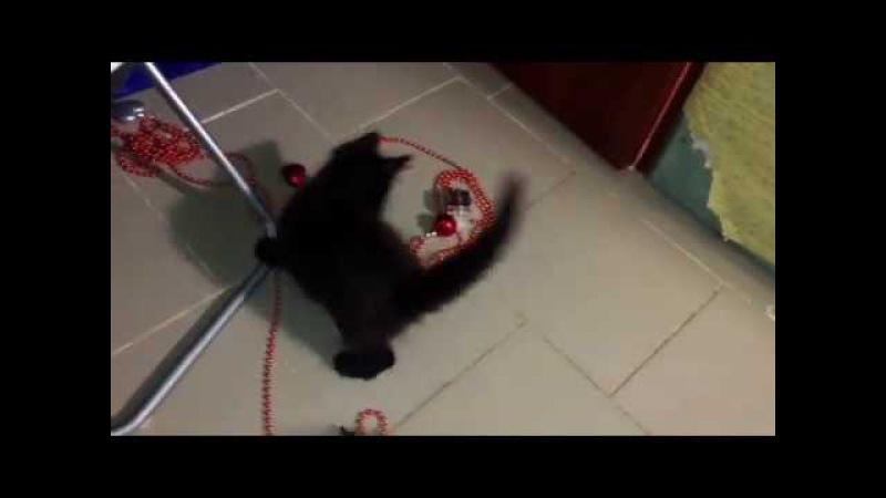 Куни играет с ёлочными игрушками :)
