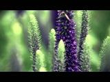 Мелодия души (Secret Garden - Sanctuary)