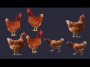 Развивающий мультик для детей Как говорят домашние животныекто как делаетКак ...