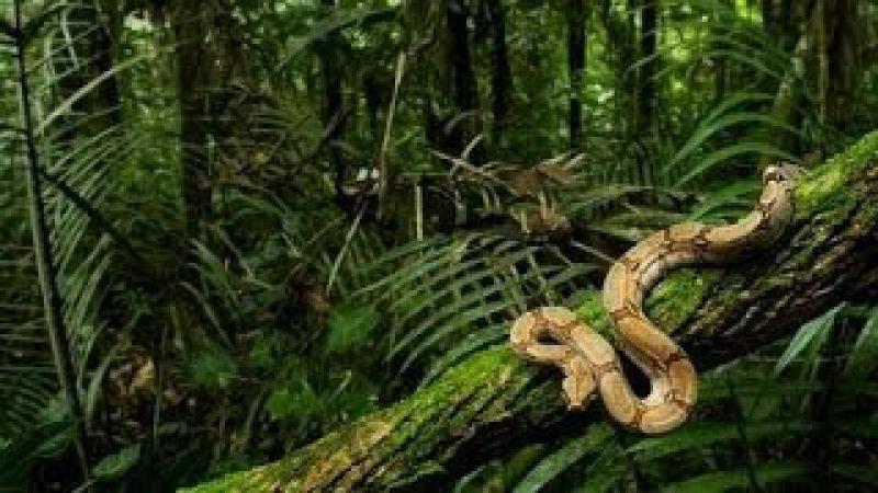 Животные убийцы. Дикий мир Бразилии. Документальный фильм Discovery.