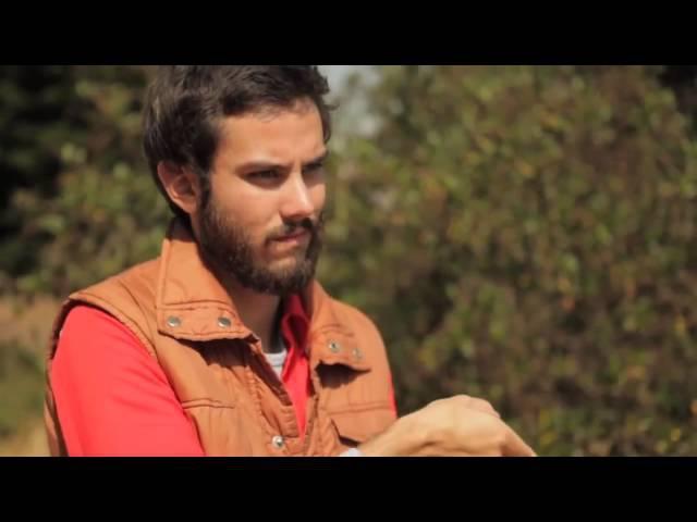 Офигенный ролик про овечек и туриста