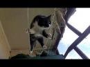 Смешные кошки приколы про кошек и котов 2017 59 Видео Приколы прошедших лет