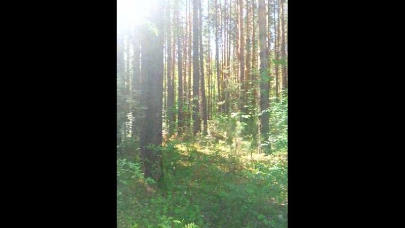лето лес жара