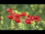 Красные Маки 6А 2014 год Школа №1356 Автор Матюхин Никита