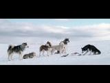 БЕЛЫЙ ПЛЕН / EIGHT BELOW (2006) HD 720