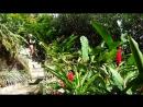Сейшелы. Сад экзотических цветов